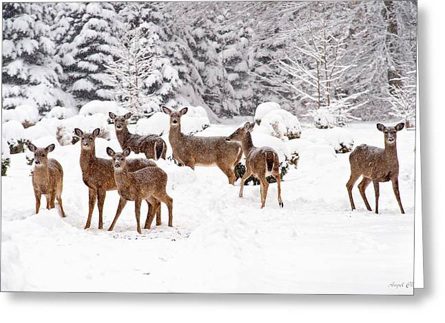 Greeting Card featuring the photograph Deer In The Snow by Angel Cher