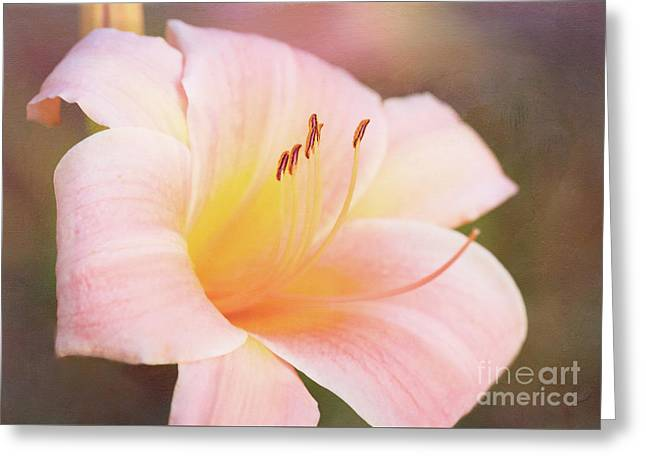 Delightful Daylily Greeting Card