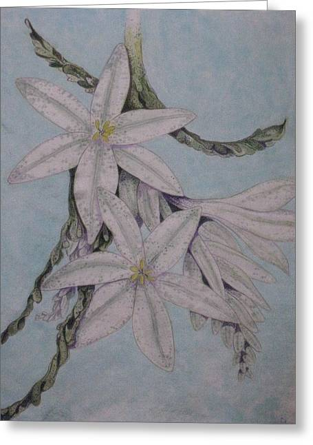 Desert Lillie Greeting Card by David Kelly