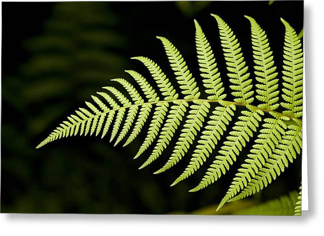 Detail Of Asian Rain Forest Ferns Greeting Card