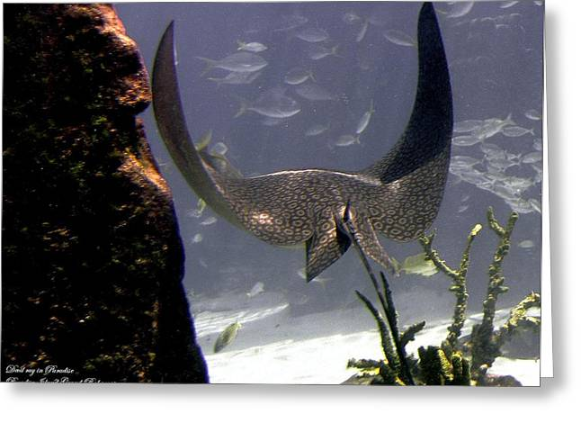 Devilray In Paradise Greeting Card by Robert Meanor