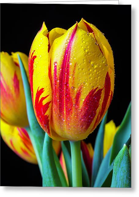 Dew Covered Tulip Greeting Card by Garry Gay