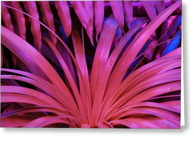 Dew Drop Pink Greeting Card by Florene Welebny