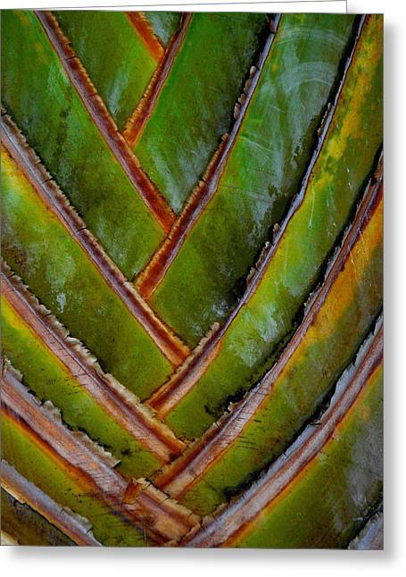 Diagonal Dance Greeting Card by Donna McLarty
