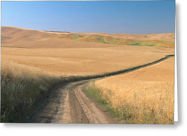 Dirt Road Through Wheat Field, Kamiak Greeting Card by Panoramic Images