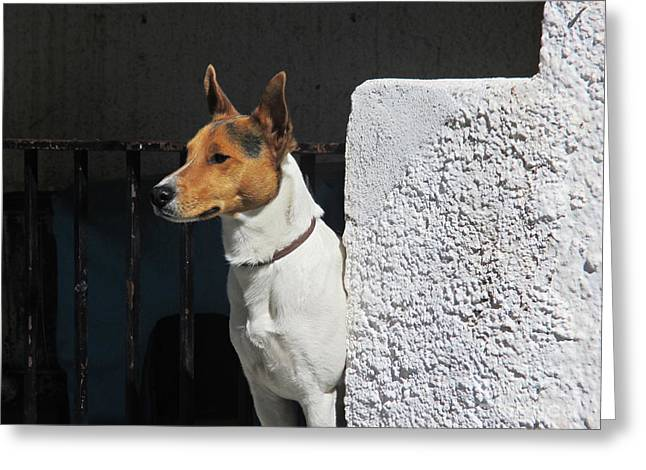 Dog In Pampaneira Greeting Card by Chani Demuijlder