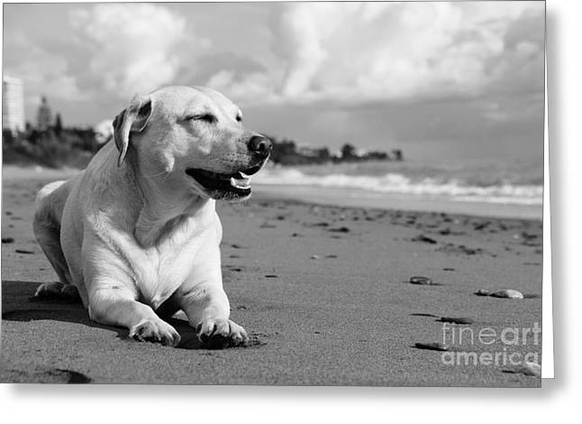 Dog - Monochrome 5  Greeting Card