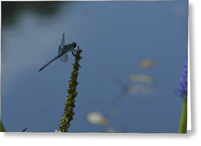 Dragon Fly Greeting Card by Linda Geiger