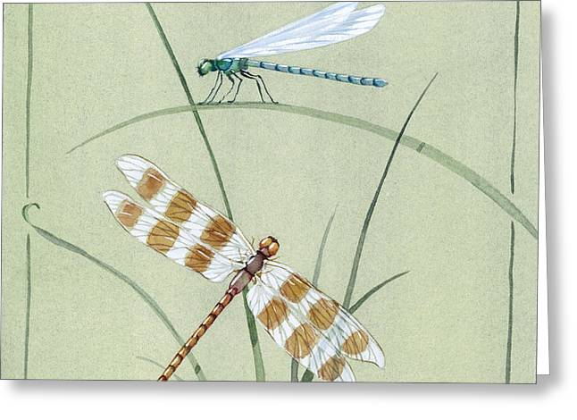 Dragonfly Damselfly Greeting Card by Paul Brent