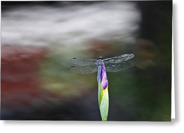 Dragonfly Greeting Card by Katherine White
