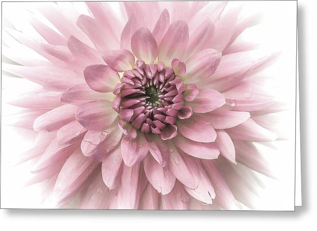 Greeting Card featuring the photograph Dreamy Dahlia by Julie Palencia