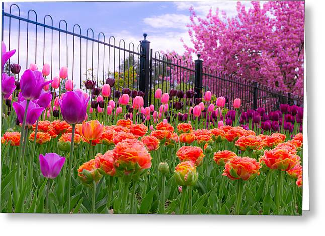 Dreamy Tulip Garden Greeting Card