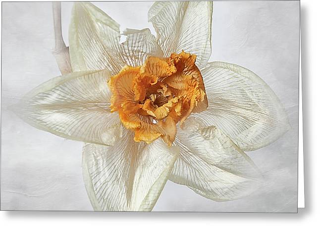 Dried Narcissus Greeting Card
