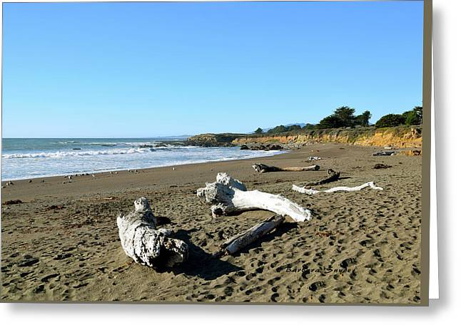 Driftwood On Moonstone Beach Greeting Card by Barbara Snyder