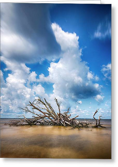 Greeting Card featuring the photograph Driftwood Sky by Alan Raasch