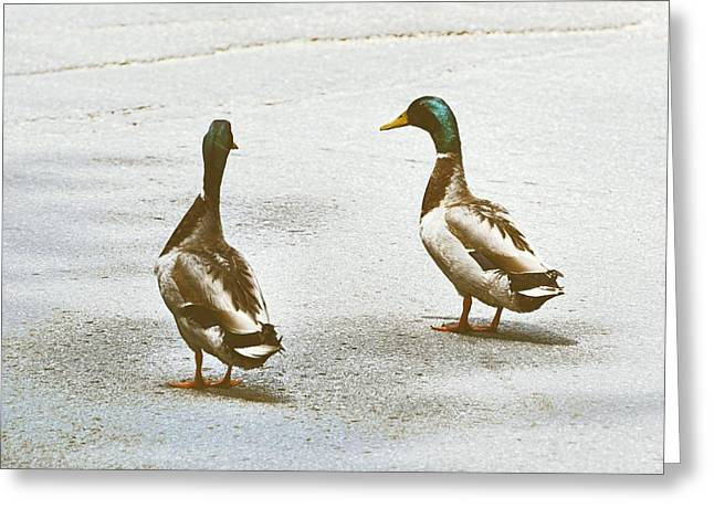Duckwalk Greeting Card by JAMART Photography