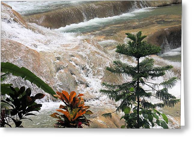 Dunns River Falls Greeting Card by Rosalie Scanlon