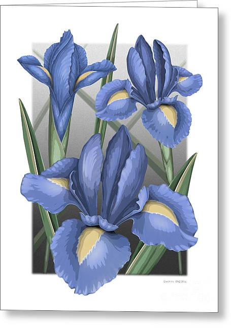 Dutch Iris Greeting Card by David Azzarello
