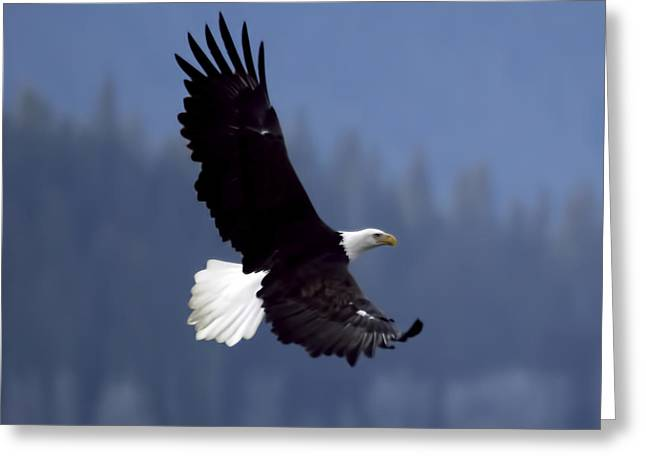 Eagle In Flight Greeting Card by Clarence Alford