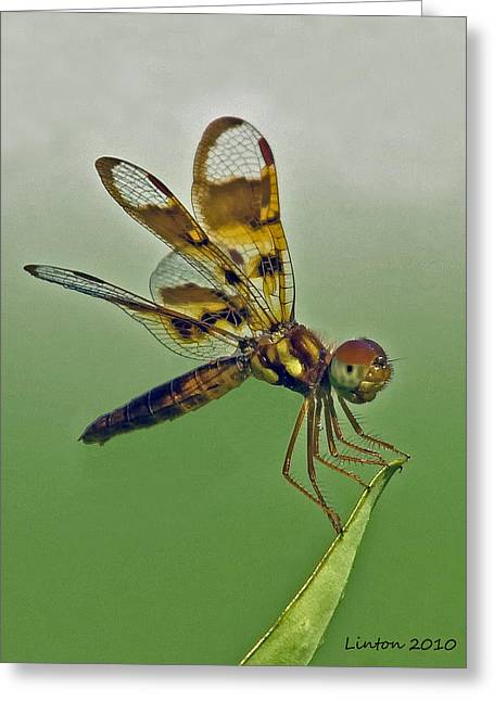 Eastern Amberwing Dragonfly Greeting Card by Larry Linton