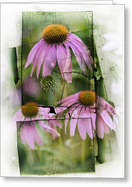Echinacea Greeting Card by Jeff Klingler
