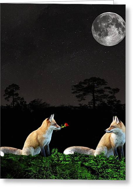 Eftalou Foxes Greeting Card