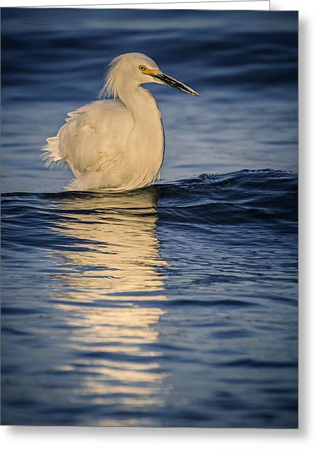 Egret At Lake Chapala Greeting Card by Dane Strom