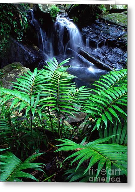 El Yunque Waterfall Greeting Card by Thomas R Fletcher