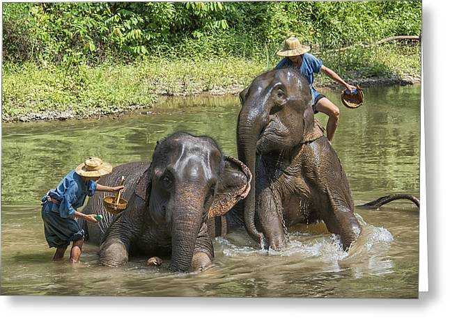 Greeting Card featuring the photograph Elephant Bath by Wade Aiken