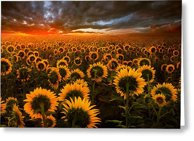 Empire Of The Sun Greeting Card by Adrian Borda