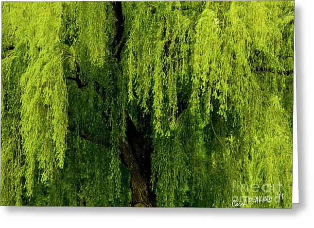 Enchanting Weeping Willow Tree  Greeting Card