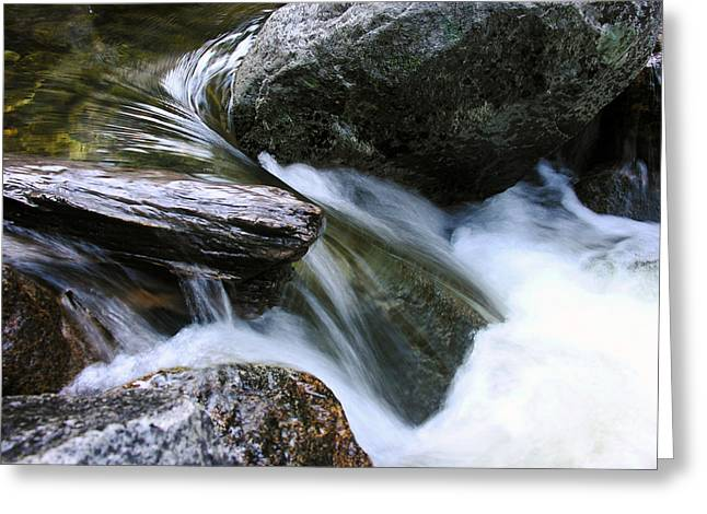 Etruded Log-end In Merced River Greeting Card by D Kadah Tanaka