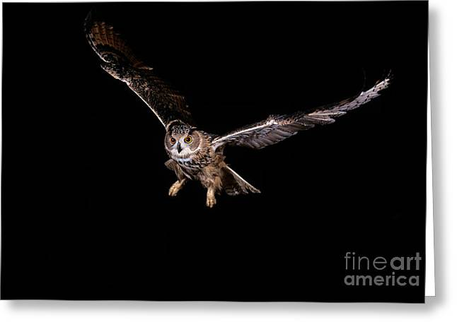 European Eagle Owl Bubo Bubo Greeting Card