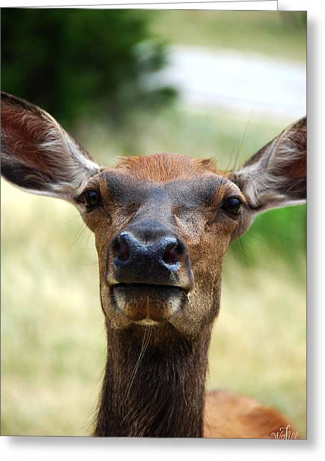 European Red Deer Greeting Card by Thea Wolff