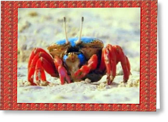 Exotic Crabs Wild Varieties Unique Mating And Crecreation Styles Grand Sizes Building Tunnels In Sta Greeting Card by Navin Joshi
