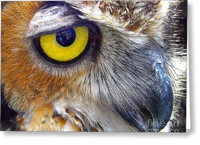 Greeting Card featuring the photograph Eye Of The Owl by Merton Allen