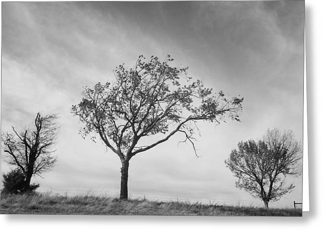 Three Trees Greeting Card by John Adams