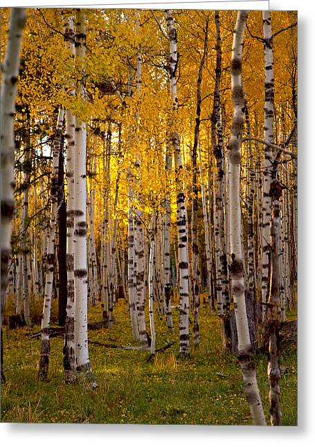 Fall At Snowbowl Greeting Card
