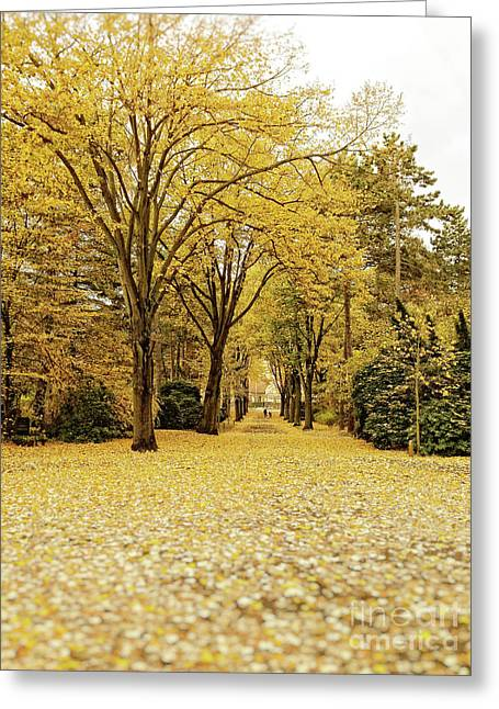 Greeting Card featuring the photograph Carpet Of Golden Leaves by Ivy Ho