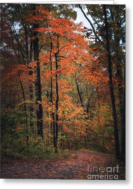 Fall In Arkansas Greeting Card
