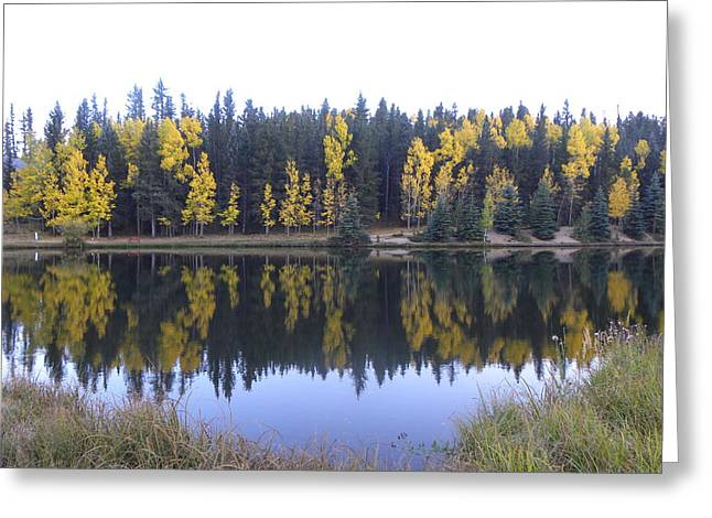 Potty Pond Reflection - Fall Colors Divide Co Greeting Card