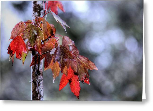 Fall In The Florida Panhandle Greeting Card by JC Findley