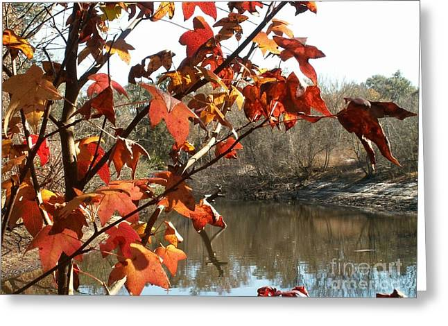 Fall On The Withlacoochee River Greeting Card
