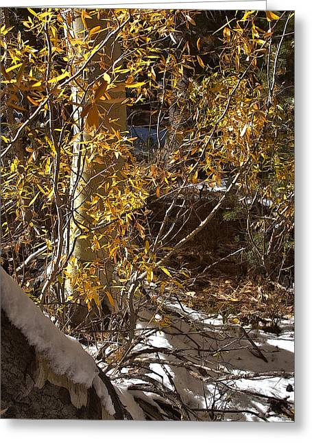 Greeting Card featuring the painting Fall Sierra Nevada Larry Darnell by Larry Darnell