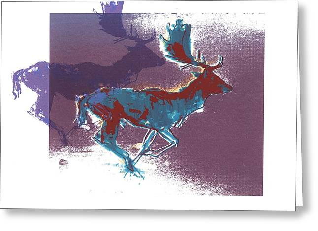 Fallow Bucks Greeting Card