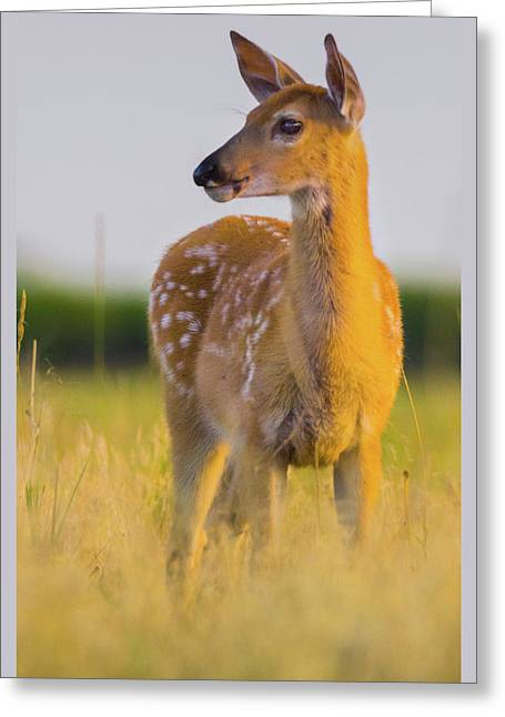 Greeting Card featuring the photograph Fawn In Sunlight by John De Bord
