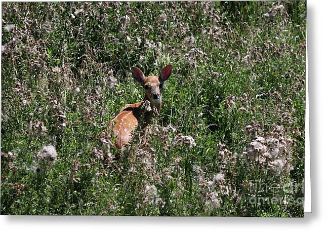 Fawn In The Grass Greeting Card