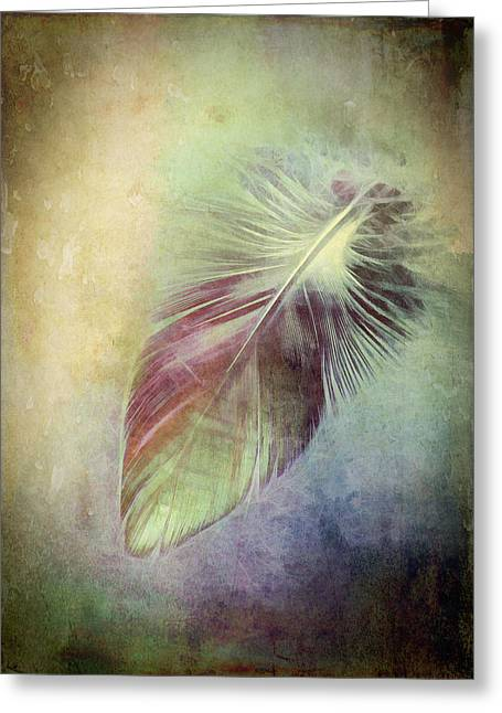 Feather Greeting Card by Ann Powell