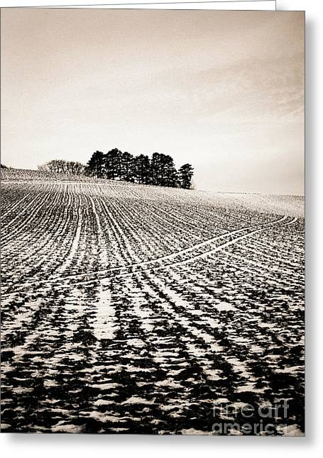 Field With Snow-covered Furrows. Auverge. France. Europe. Greeting Card by Bernard Jaubert