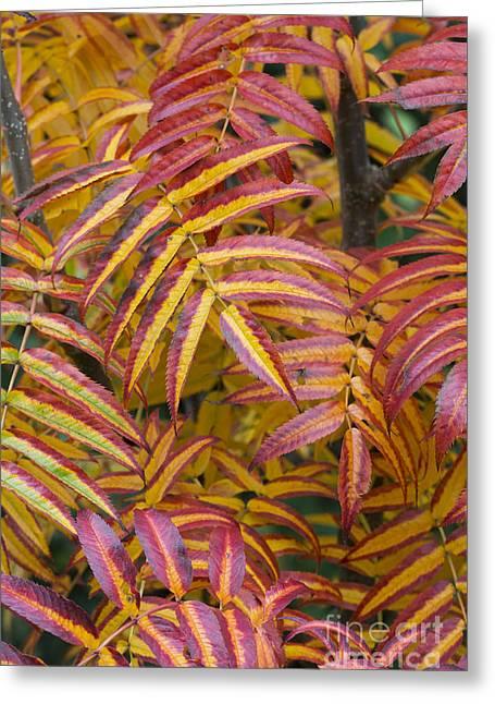 Fiery Foliage  Greeting Card by Tim Gainey